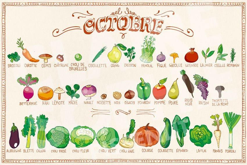 fruits et légumes d'automne, claire Sophie pissenlit