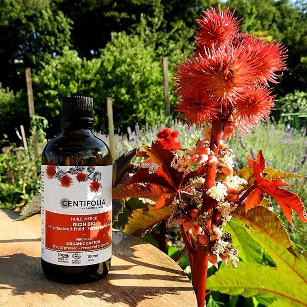 huile ricin bio centifolia